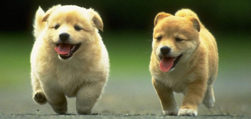 Negozio per cani