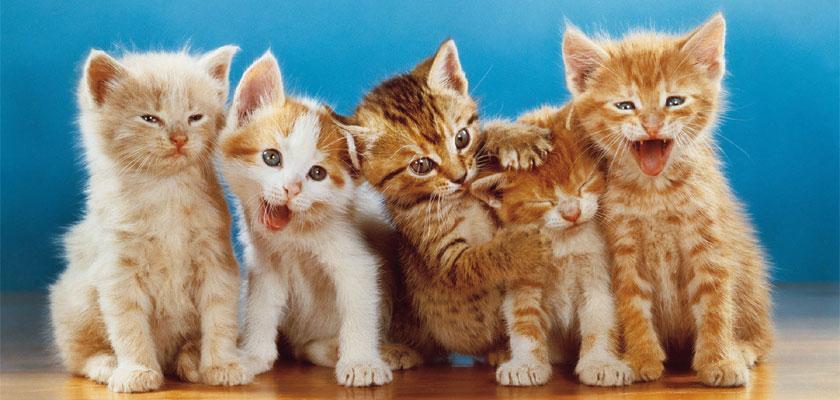 Negozio per gatti