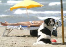Troppo poche le spiagge aperte ai cani