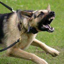 Se sei aggressivo lo sarà anche il tuo cane