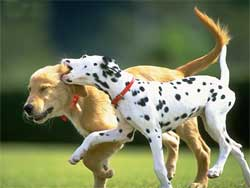 cuccioli-che-giocano