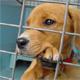 Adottare un cane in canile