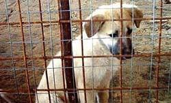Un cucciolo in canile