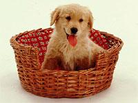 Un cucciolo nella sua cuccia