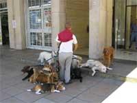 dog_sitter_indaffarato
