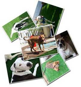 Mandaci le foto del tuo cane