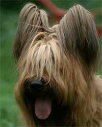 Foto di cani, foto di cuccioli