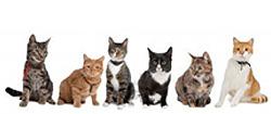 Prodotti per gatti