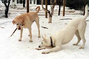 gioco-fra-cani
