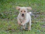 happy_puppy2