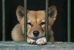 imprigionato2