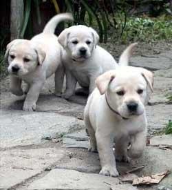 Buckshot, Katie e Obu-jet