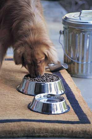 L'alimentazione del cane