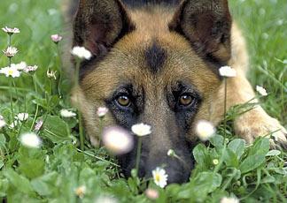 In arrivo l'obbligo di microchip per i cani