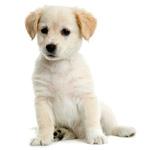 Scegli il nome giusto per il tuo cucciolo