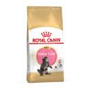 Royal CaninKitten Maine Coon 36