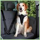 TrixiePettorina per automobile Dog Protect
