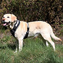 Trixie Pettorina Flash USB