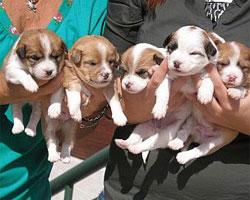Tratta di cuccioli dall'est Europa
