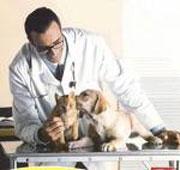 veterinario_con_cuccioli