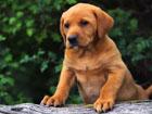 Sfondi desktop gratis per il tuo PC con cani e cuccioli