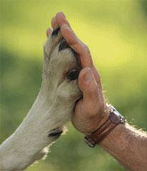 Adotta un cane: un patto per la vita!